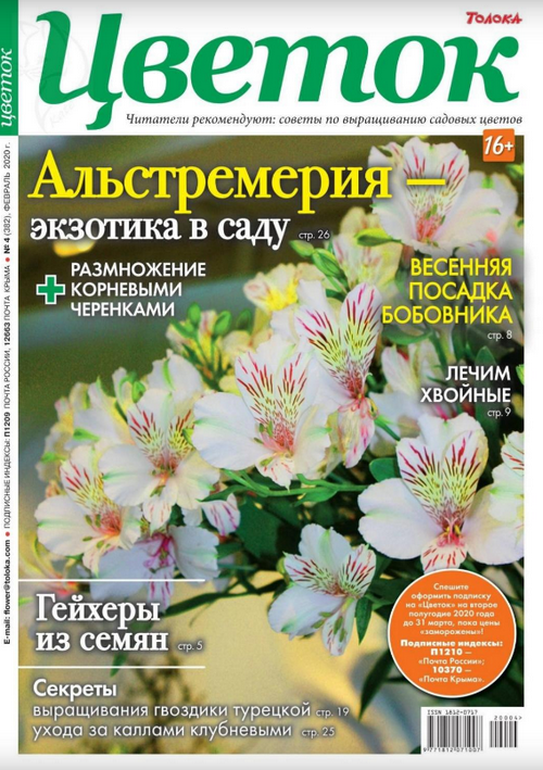 Цветок №4 (февраль/2020)