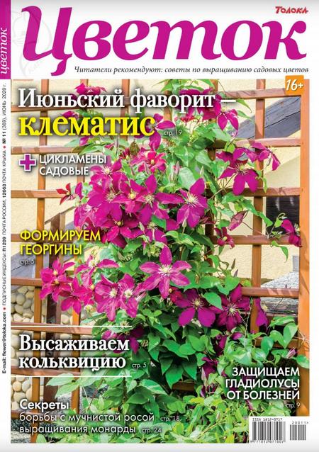 Цветок №11, июнь 2020