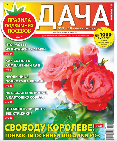Дача №19, октябрь 2020
