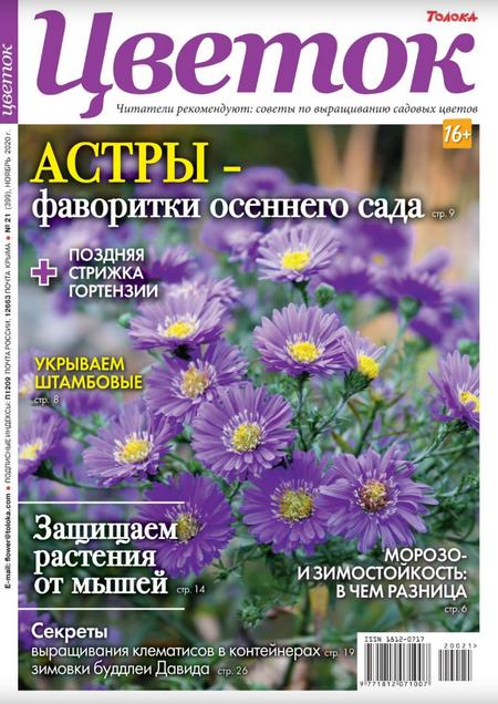 Цветок №21, ноябрь 2020