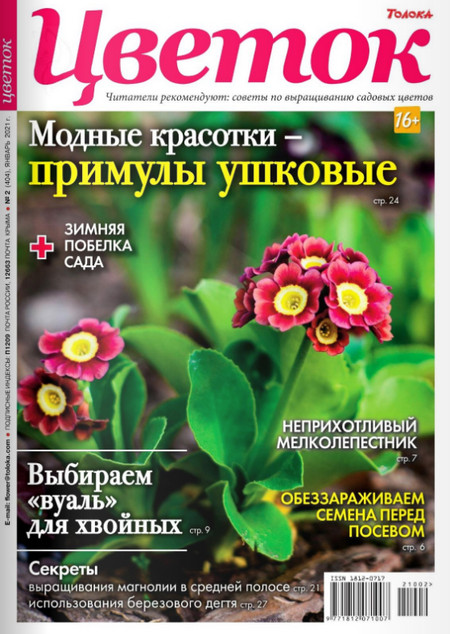 Цветок №2, январь 2021