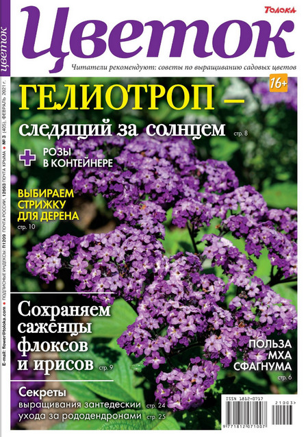 Цветок №3, февраль 2021